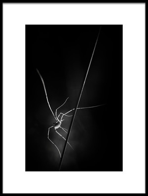 Buy this art print titled Snatcher of Light by the artist Pali Gerec