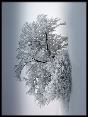Art print titled Snow_baum by the artist Nicolas Schumacher