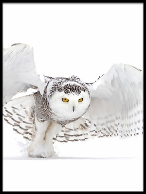 Buy this art print titled Snowy Owl - Jazz Wings by the artist Jim Cumming