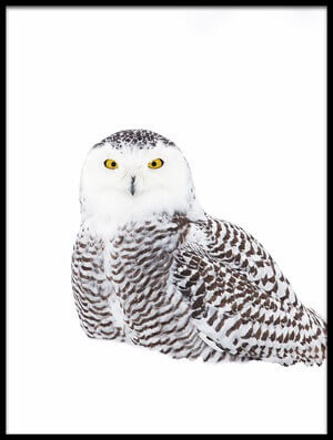 Art print titled Snowy Owl In Winter Snow by the artist Jim Cumming