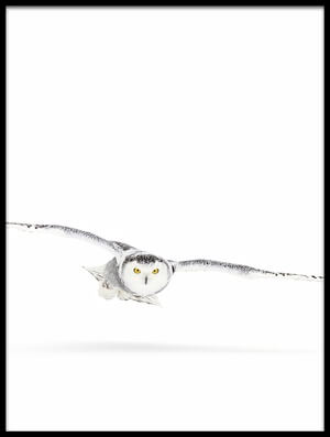 Buy this art print titled Snowy Owl On the Hunt by the artist Jim Cumming