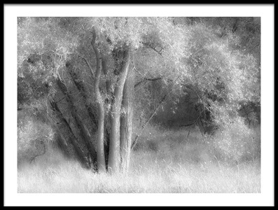 Buy this art print titled Soft Tree by the artist Hilde Ghesquiere