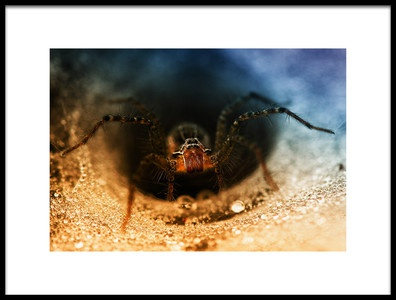 Art print titled Spider Trap Hole by the artist Abdul Gapur Dayak