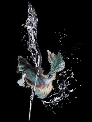 Buy this art print titled Splash by the artist shikhei goh