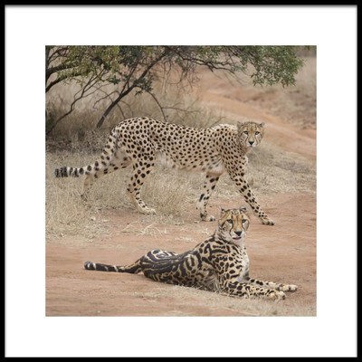 Art print titled Spots and Stripes by the artist Greg Barsh
