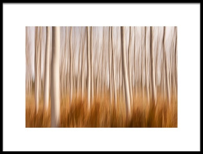 Art print titled Spring Impressions In a Poplar Fields by the artist David Frutos