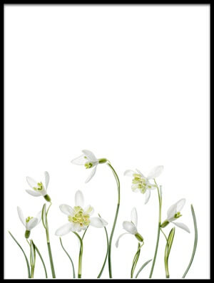 Buy this art print titled Spring Snowdrops II by the artist Mandy Disher