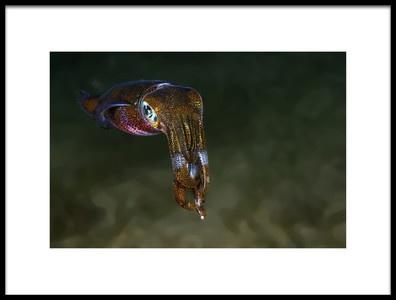 Art print titled Squid by the artist Ilan Ben Tov