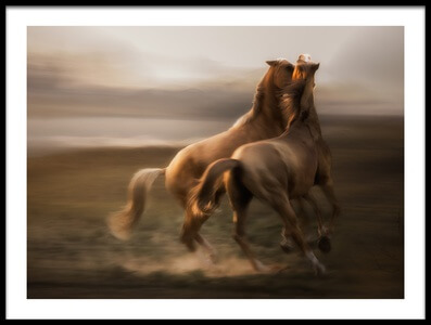 Art print titled Stallion Rivalry by the artist Charlaine Gerber