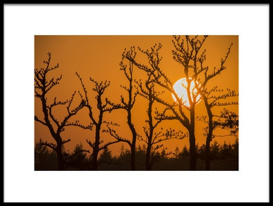 Art print titled Starlings In the Evening by the artist daan meeusen