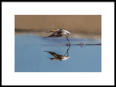 Art print titled Stilts Amp Avocets by the artist jerry ju