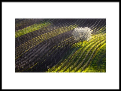 Buy this art print titled Strings of Spring by the artist Vlad Sokolovsky