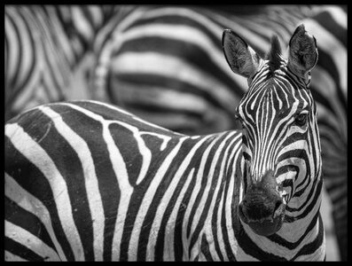 Art print titled Stripes by the artist Alessandro Catta