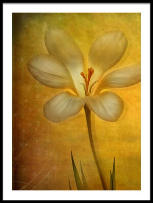 Buy this art print titled Summer by the artist Lotte Andersen