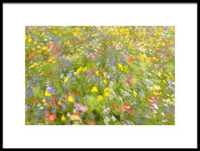 Art print titled Summer Field Flowers by the artist Piet Haaksma