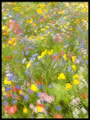 Art print titled Summer Field Flowers by the artist Piet Haaksma