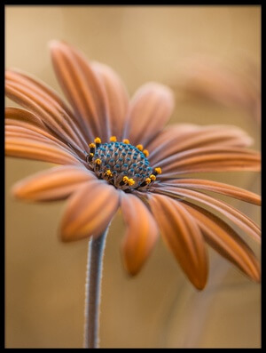 Buy this art print titled Summer Glow by the artist Mandy Disher