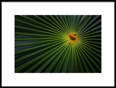 Art print titled Sunburst by the artist Brian Jackson
