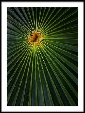 Buy this art print titled Sunburst by the artist Brian Jackson