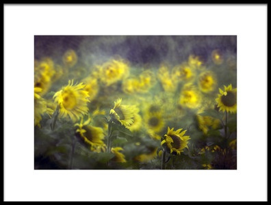 Art print titled Sunflower by the artist danca
