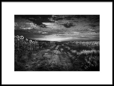 Art print titled Sunflowers Avenue by the artist Nicodemo Quaglia