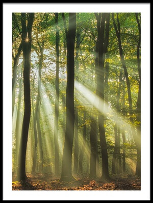 Art print titled Sunny Start to the Day  by the artist Piet Haaksma