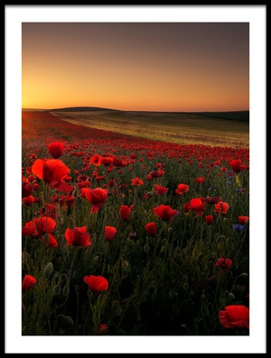 Art print titled Sunrise Between Poppies by the artist Amada Terradillos S.