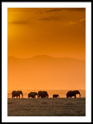 Buy this art print titled Sunrise Over Amboseli by the artist Jeffrey C. Sink