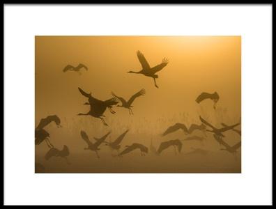 Art print titled Sunrise With Cranes by the artist Ronen Rosenblatt