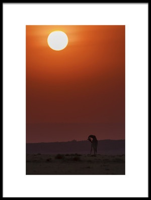 Art print titled Sunset Bathing by the artist Henry Zhao