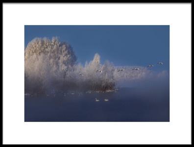 Art print titled Swan Lake by the artist Dmitry Kupratsevich