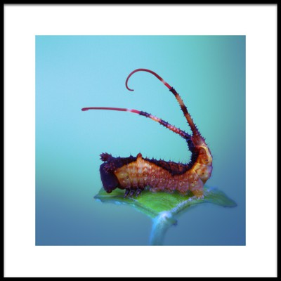Art print titled Tail Threads by the artist Jimmy Hoffman
