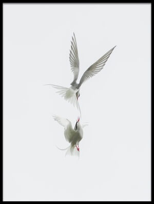 Buy this art print titled Tern by the artist Jure Kravanja