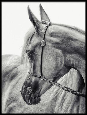 Buy this art print titled The Arabian Horse by the artist Piet Flour
