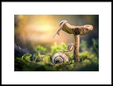 Art print titled The Awakening of Snails by the artist Alberto Ghizzi Panizza
