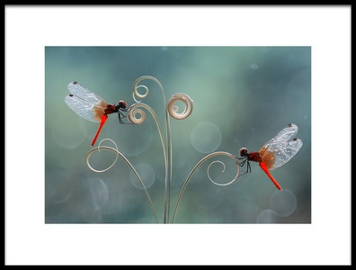 Art print titled The Beauty of a Small World by the artist Abdul Gapur Dayak
