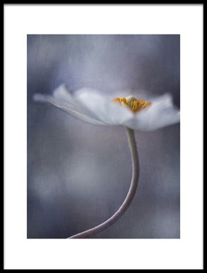 Buy this art print titled The Beauty Within by the artist Priska Wettstein