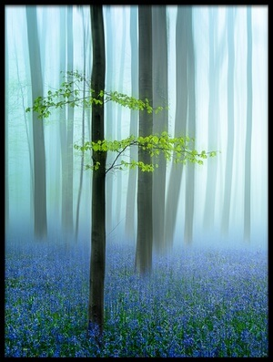 Buy this art print titled The Blue Forest  by the artist Piet Haaksma