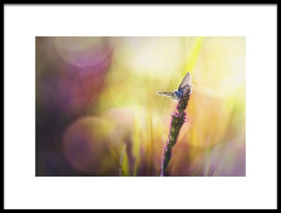 Art print titled The Butterfly by the artist Bob Daalder photography