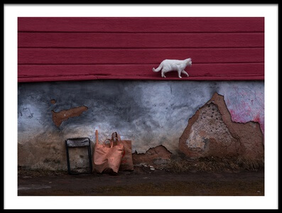 Buy this art print titled The Cat That Walked by Himself by the artist Anna Kudriavtseva
