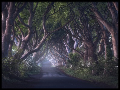 Buy this art print titled The Dark Hedges by the artist Daniel Fleischhacker