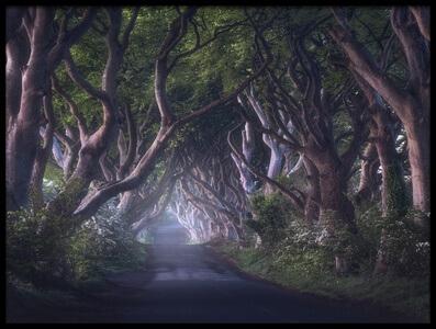 Art print titled The Dark Hedges by the artist Daniel Fleischhacker