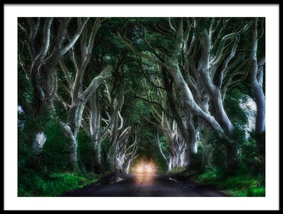 Buy this art print titled The Dark Hedges by the artist Aida Ianeva
