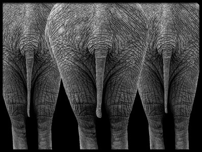 Buy this art print titled The Elephants by the artist Sayyed Nayyer Reza