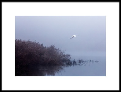 Art print titled The Flight of the Egret by the artist François Le Rolland