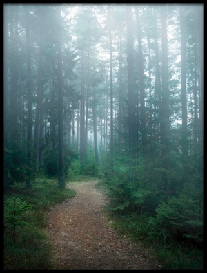 Art print titled The Forest of Secrets by the artist Christian Lindsten