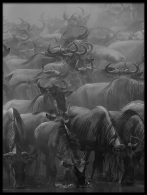 Buy this art print titled The Great Migration by the artist Henry Zhao