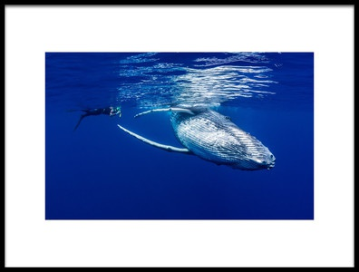 Art print titled The Lady Amp the Humpback by the artist Thomas Marti