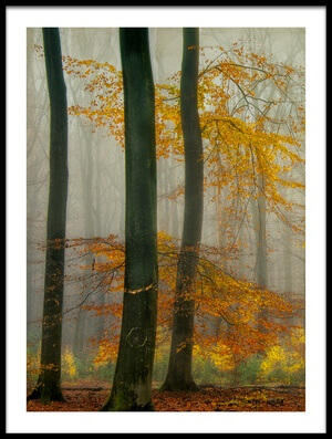 Buy this art print titled The Latest Autumn Colors  by the artist Piet Haaksma