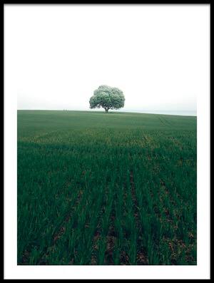 Buy this art print titled The Lonely Oak Tree by the artist Christian Lindsten